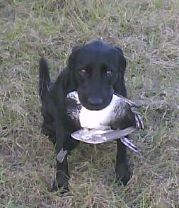 Aggie with Bluebill (253x294).jpg