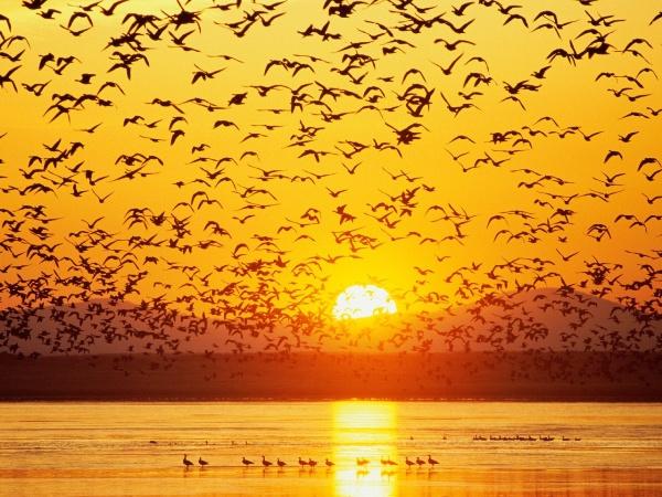 Saskatchewan Launches New Conservation Program