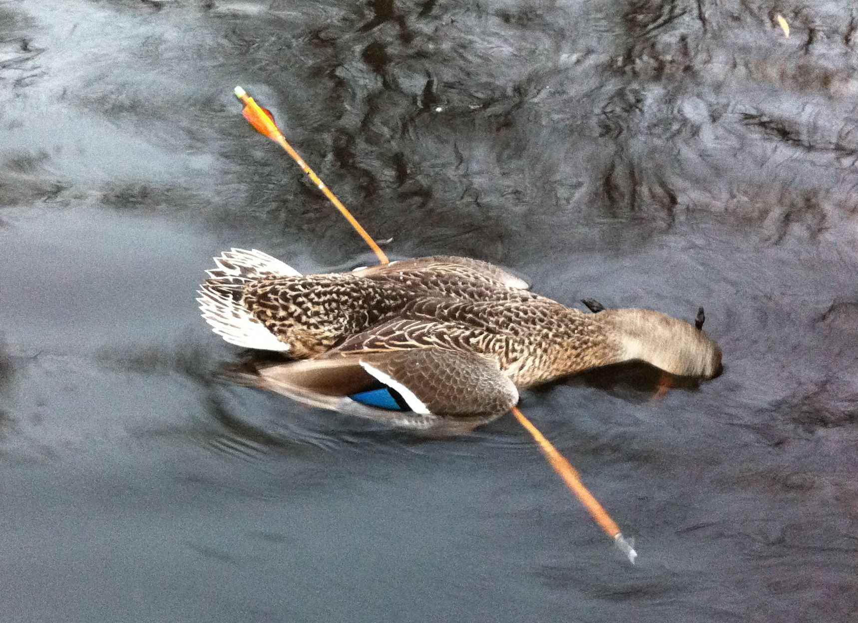 arrow duck.jpg