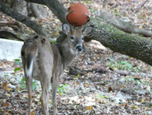 basketballdeer.jpg