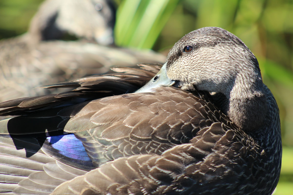 blackduck11.jpg