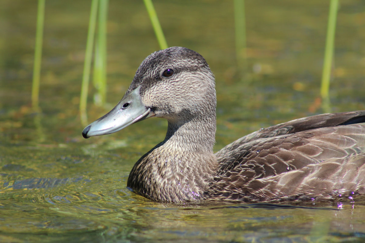 blackduck14.jpg