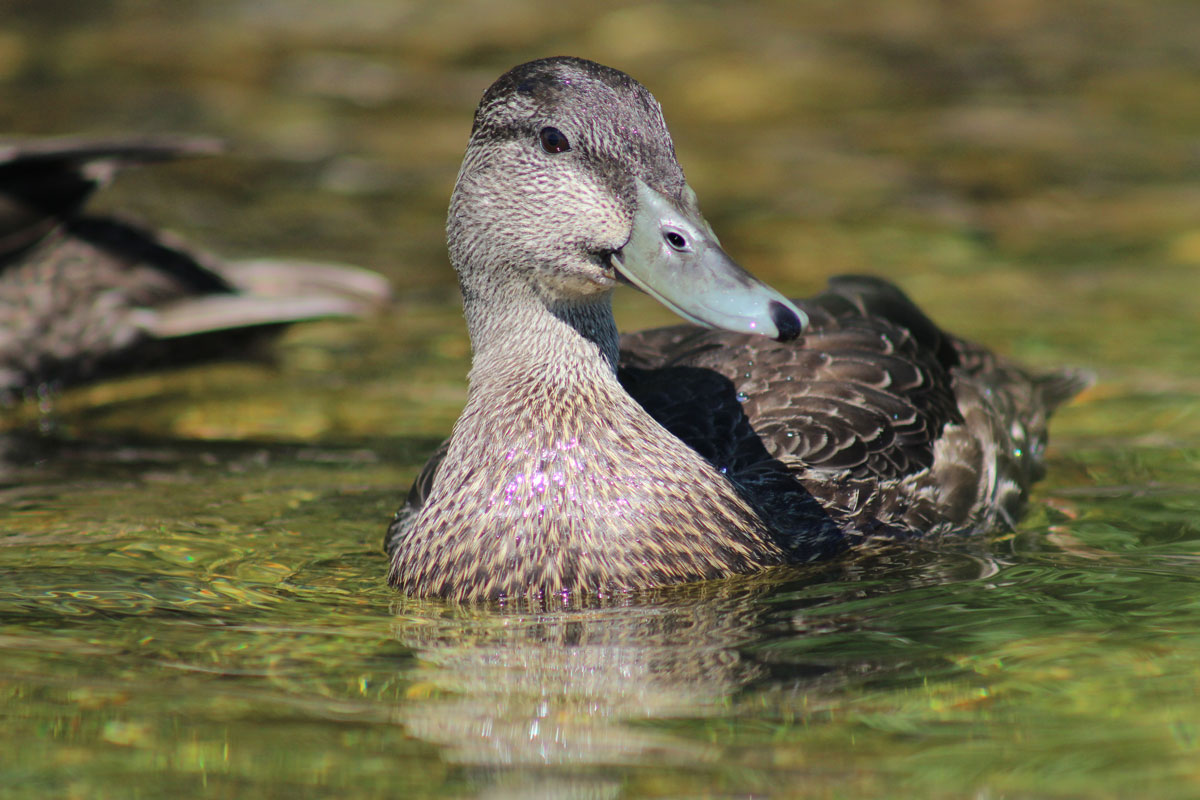 blackduck15.jpg