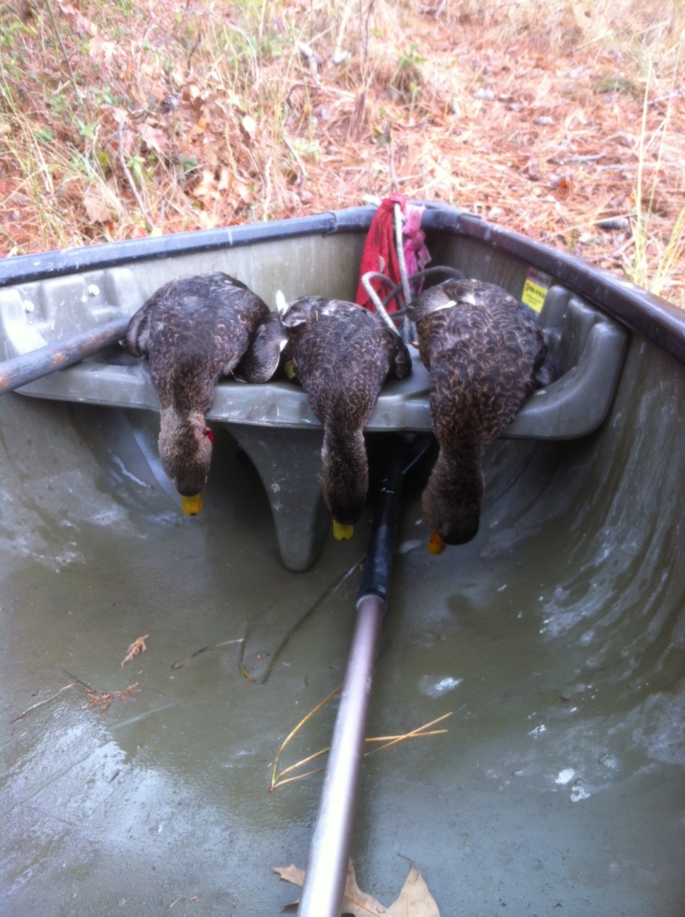Caserta Black Ducks w Mallory.JPG