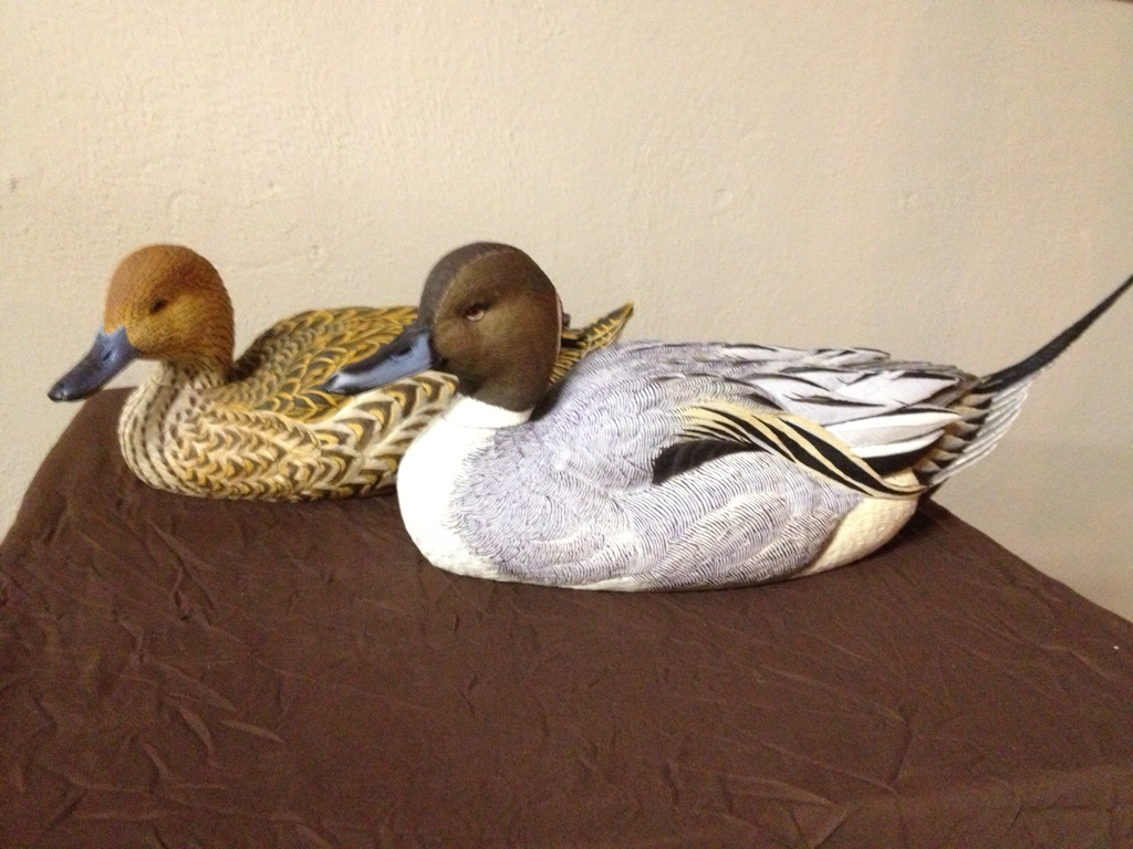 dakota pintails.jpg