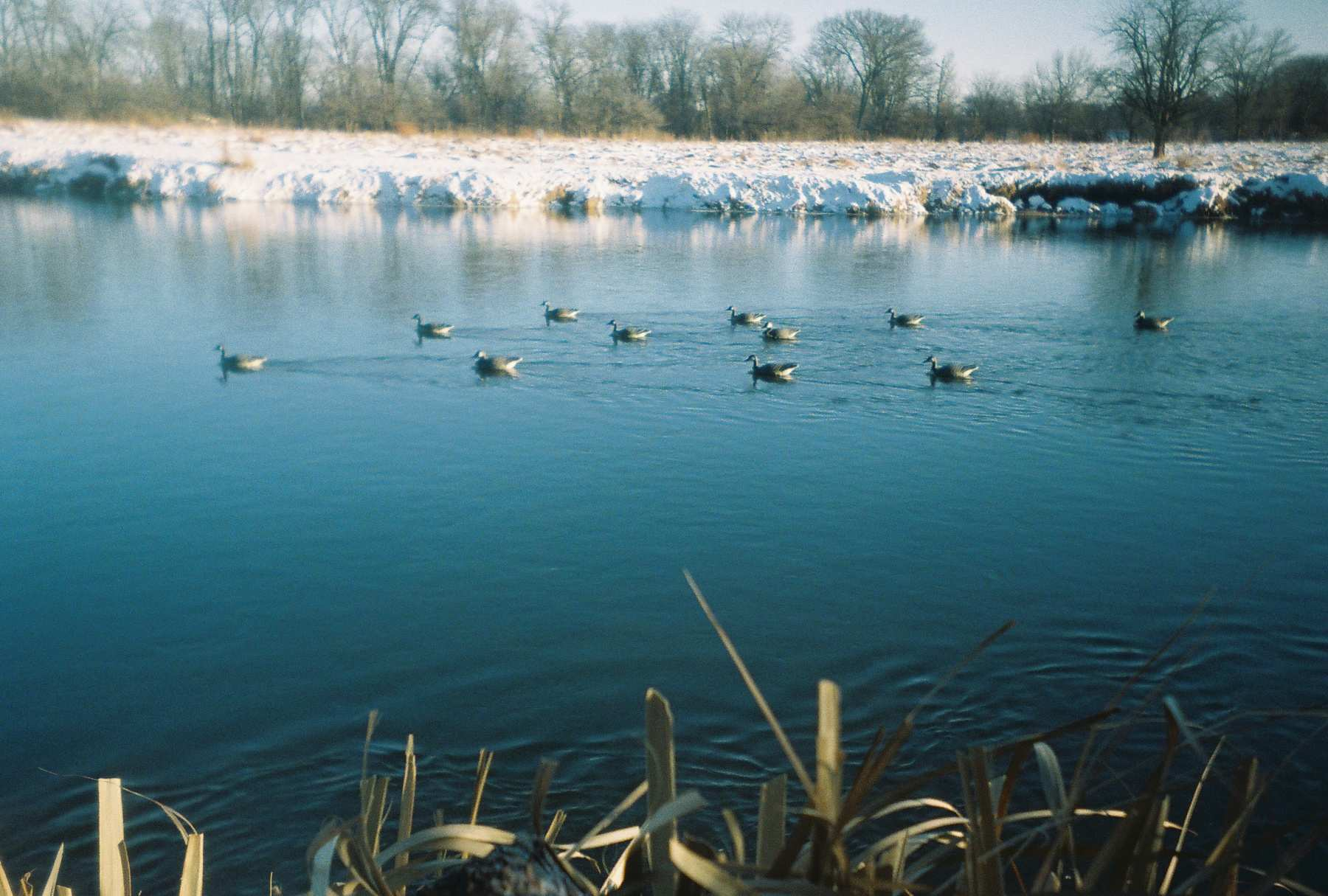 decoys on river 12-09.jpg