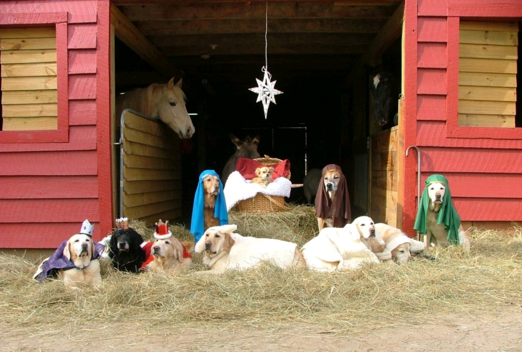 dog-nativity-scene-01.jpg