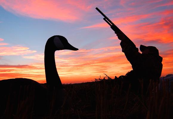 Early Goose Season