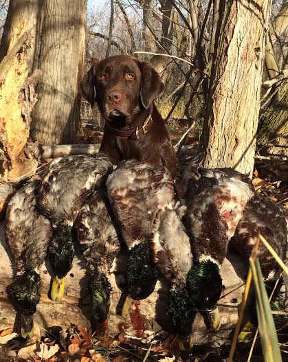 Gage with mallards.jpg