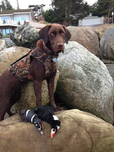 Harli Small - Rotated.jpg