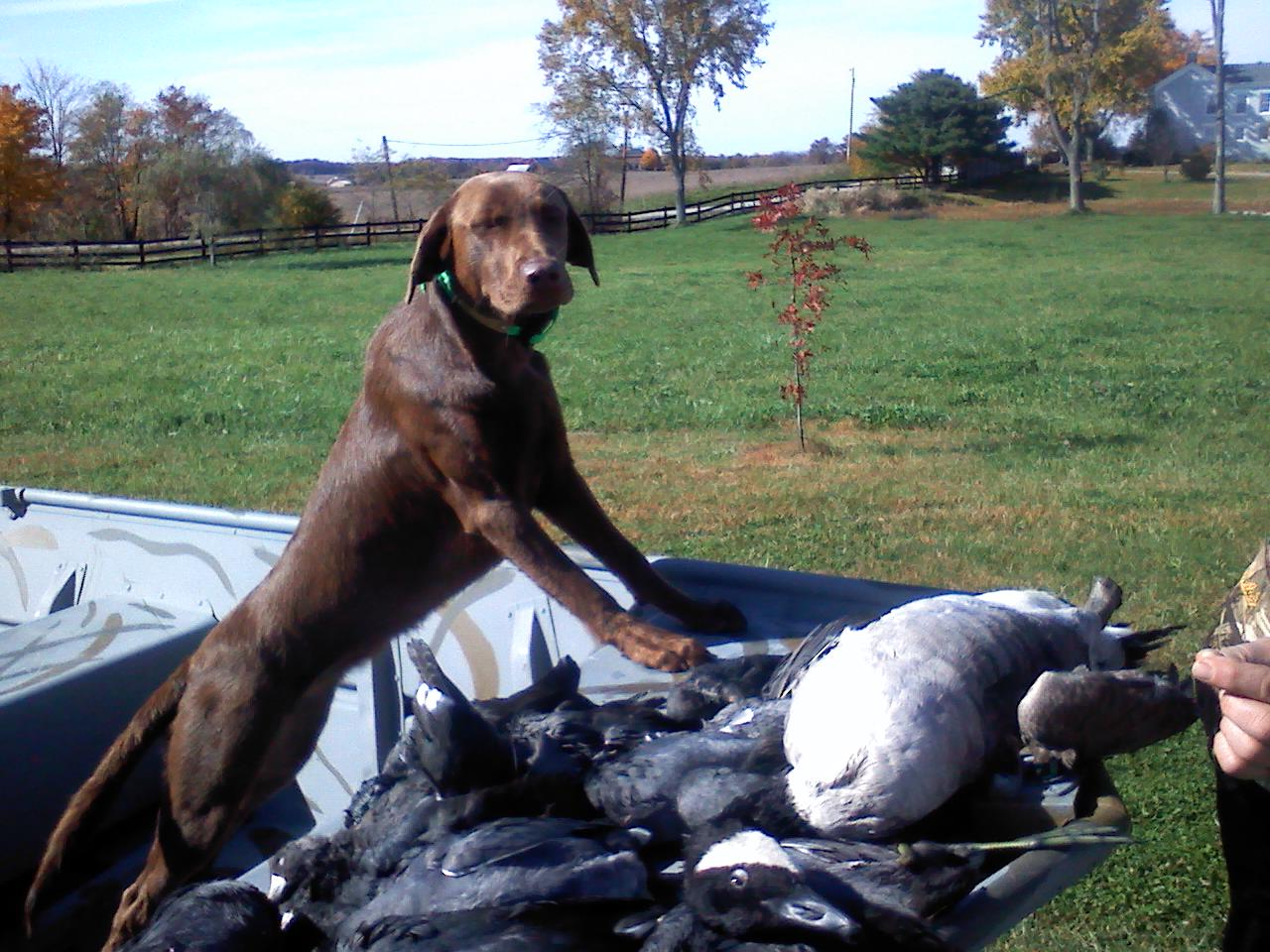 hershey and the coots.jpg
