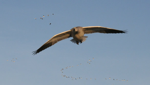 Good Morning Missouri