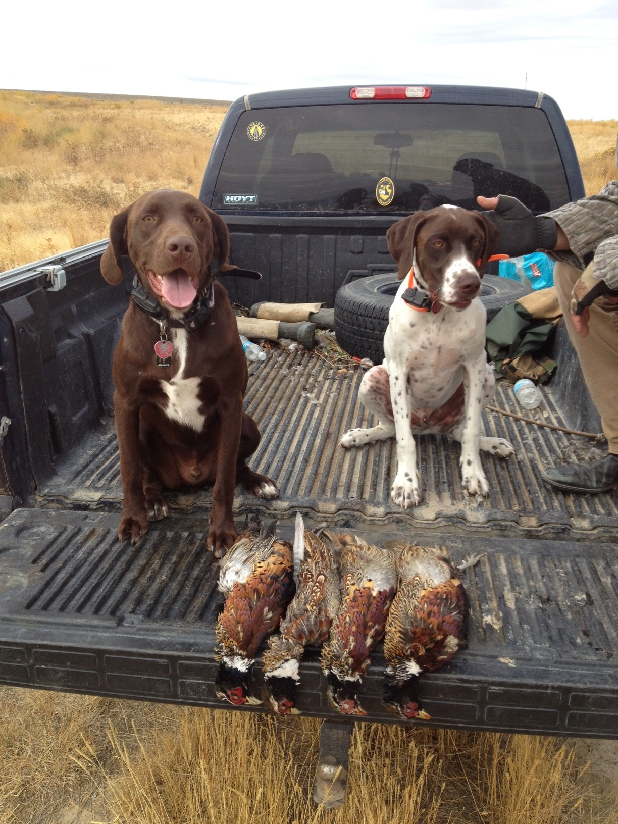 Koda and Samson 2012 pheasants.JPG