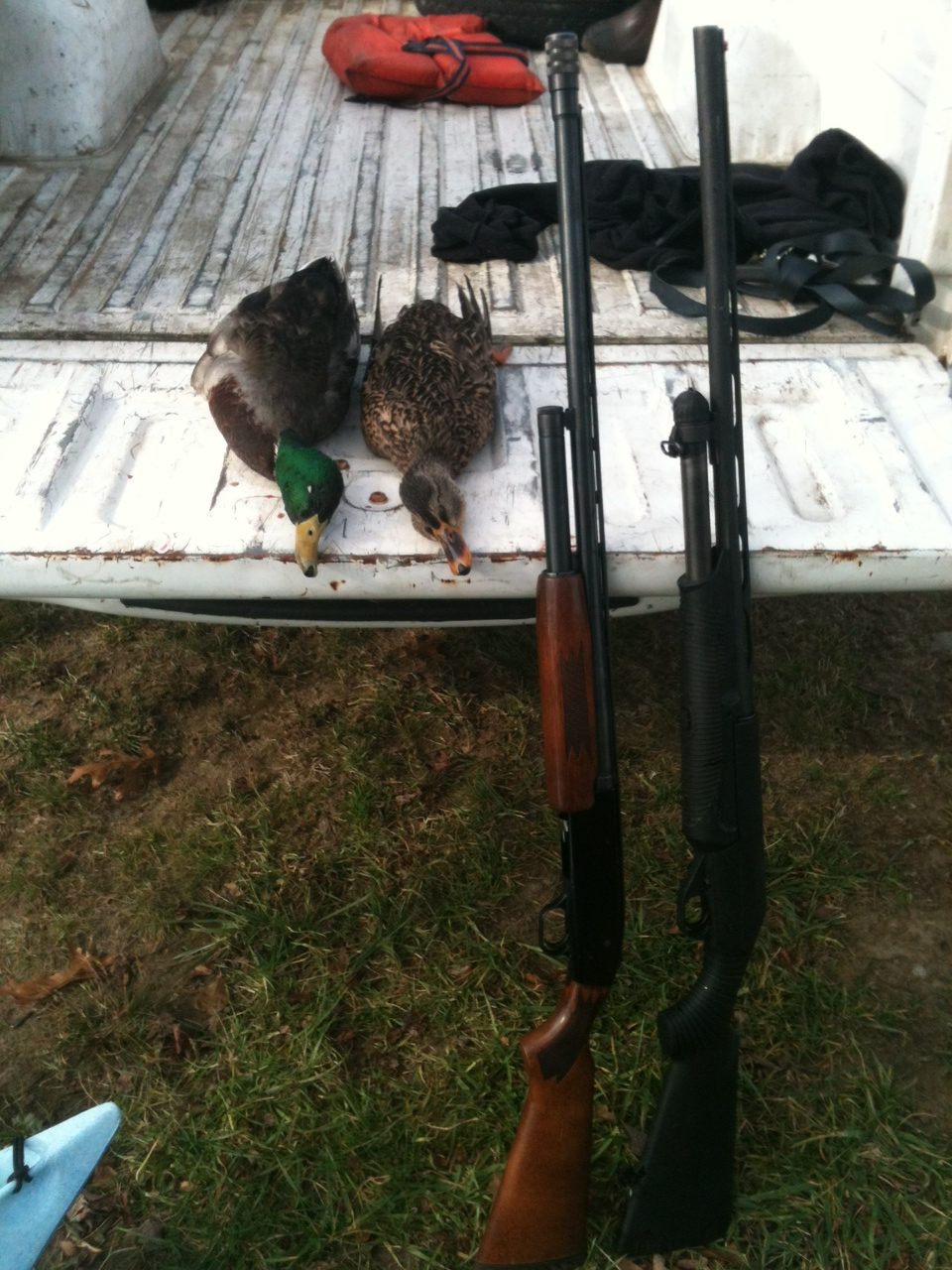 mallards and guns.jpg