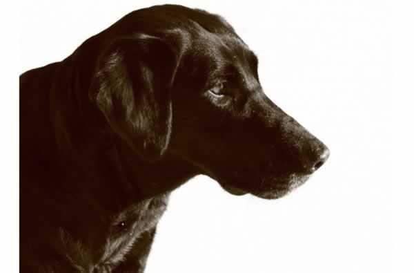 Dog Marsh Dog