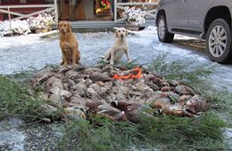 Pheasant Shoot.jpg