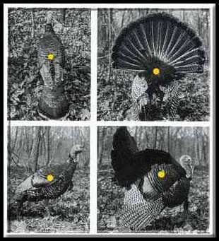 Turkey kill zone.jpg
