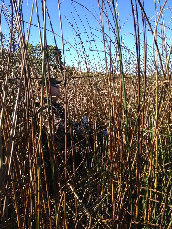 Wade in the rushes.jpg