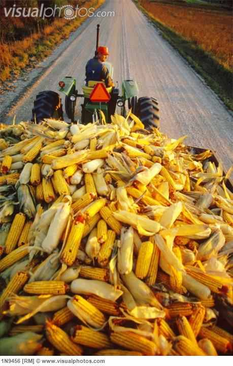 wagon_load_of_corn_wagon_load_of_millard_corn_during_harvest_nebraska_1N9456.jpg